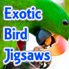 Exotic Bird Jigsaw Tourna…