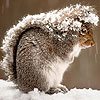 Squirrel in the snow slid…
