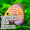 Tropical Fish Jigsaw Tour…