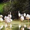 White flamingos slide puz…
